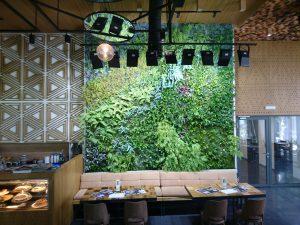 вертикални градини, зелени стени, Мистър Грийн, Рафи, Raffy