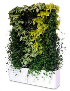 вертикална градина двустранна, зелена стена, преместваема