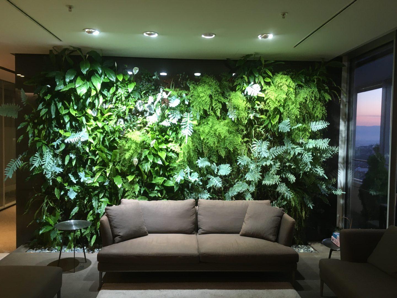 Вертикална градина, зелена стена, Мистър Грийн